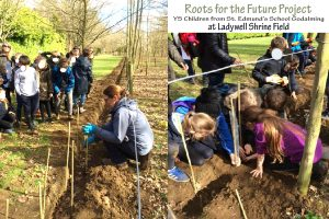 Roots for the future 1403019